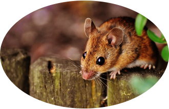 mice rats rodents pest control