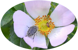 pest blog chemicals pest control
