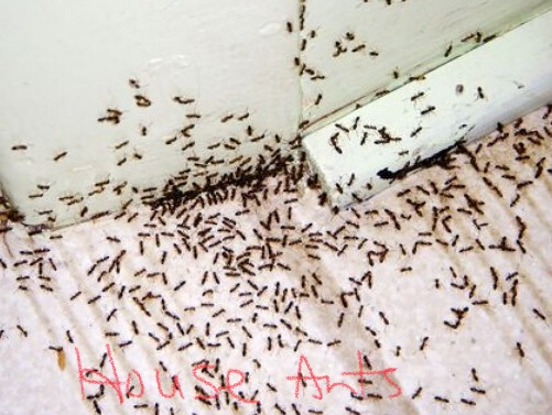 Where Are All The Ants Coming From Good Riddance Pest